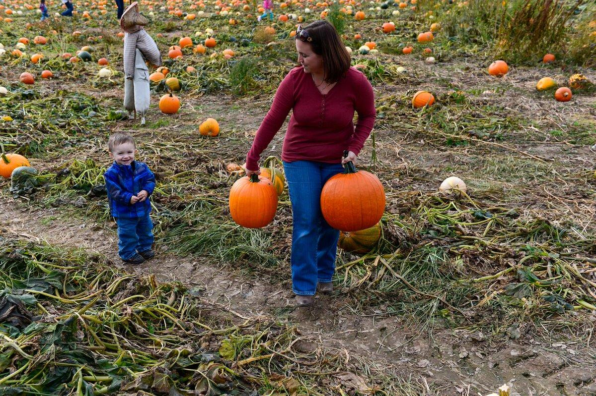 Pumpkin Picking at Saunderskill Farm